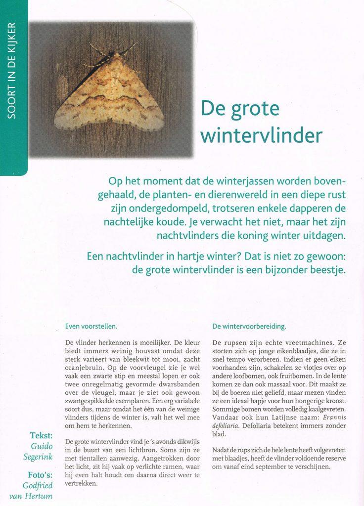 natuur ruimte december 2013 artikel wintervlinder (2)