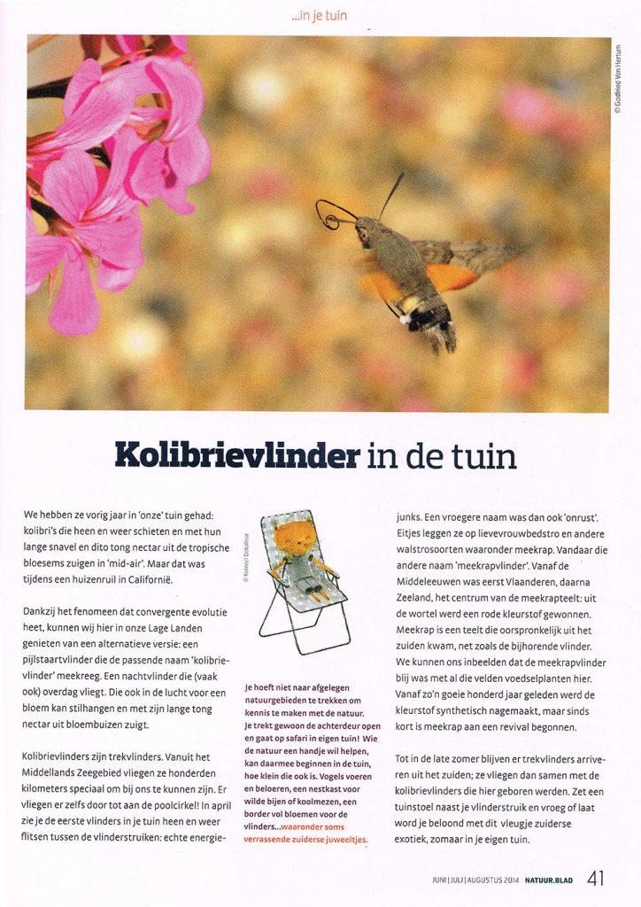 natuurblad juni 2014 artikel kolibrievlinder