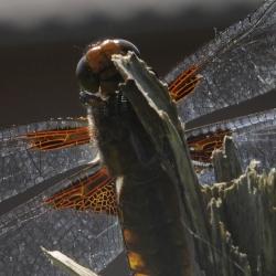 platbuiklibel