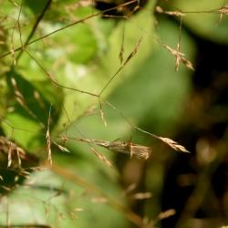zoek de vroege grasmot