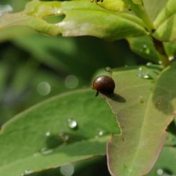 larve op hertshooi