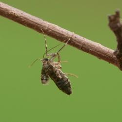 kleine wintervlinder vrouw