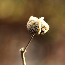 plant zaaddoosje