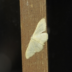 nachtvlinder onbekend