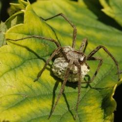 spin kraamwebspin
