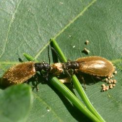 ruigkevers