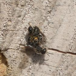 bijtjes insectenhotel