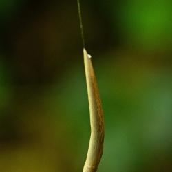 slak aan slijmdraad van 1 meter lengte
