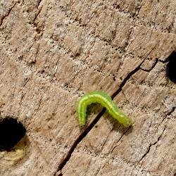 ontsnapt uit het insectenhotel