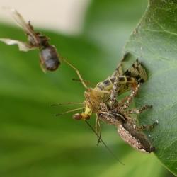 spin met schorpioenvlieg