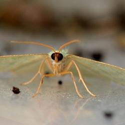 kleine zomervlinder