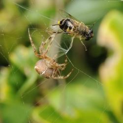 spin met prooi1