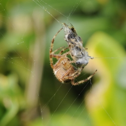 spin met prooi2