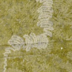 slakkensporen