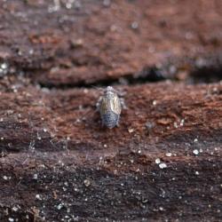 cicade spoorcicade