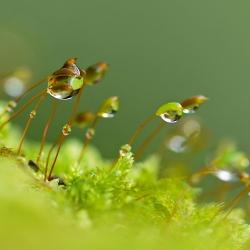 herffstdruppels op mos